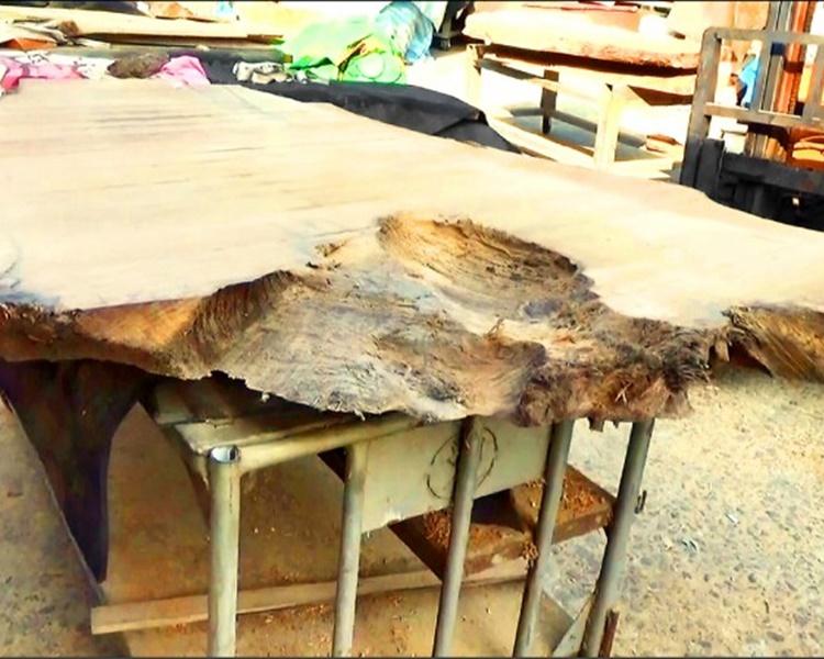 台破「山老鼠」盜木集團 檢5.59噸珍貴林木拘6人